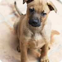 Adopt A Pet :: NillaWafer - San Diego, CA