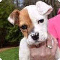 Adopt A Pet :: Reesie - Greensboro, GA