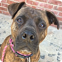 Adopt A Pet :: LIBERTY - Media, PA