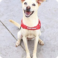 Adopt A Pet :: Barnee - Castro Valley, CA