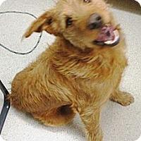 Adopt A Pet :: Max handsome boy - Sacramento, CA