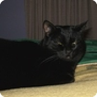 Adopt A Pet :: Raven - Vancouver, BC
