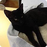Adopt A Pet :: Edith - Lake Charles, LA