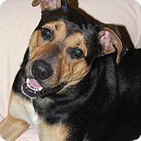 Adopt A Pet :: Gracie - Oakland, AR