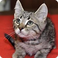 Adopt A Pet :: Parker - Medina, OH