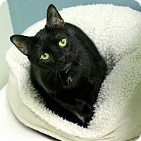 Adopt A Pet :: Flopper - Medina, OH