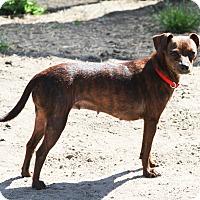 Adopt A Pet :: Kimzee - Sylvania, GA