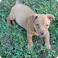 Adopt A Pet :: Cricket - Bedford, VA