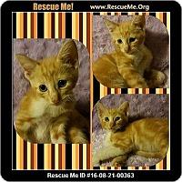 Adopt A Pet :: Asain - Beaumont, TX