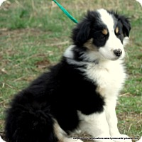 Adopt A Pet :: Chester/ADOPTED - PRINCETON, KY