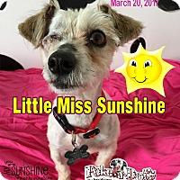 Adopt A Pet :: Sunshine - Lodi, CA