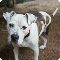 Adopt A Pet :: Brandy - Decatur, GA