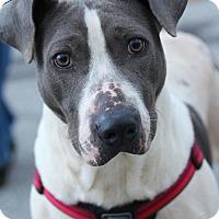 Adopt A Pet :: Makenzie - Lafayette, IN