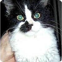 Adopt A Pet :: Melody - Jacksonville, FL