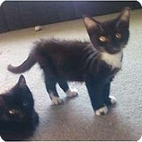 Adopt A Pet :: Toesy - Kirkwood, DE