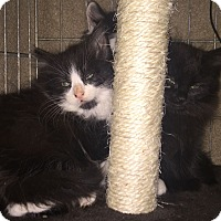 Adopt A Pet :: Hershey - Dallas, TX