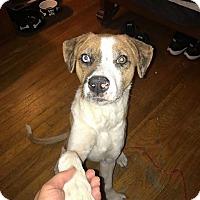 Adopt A Pet :: King - Cliffside Park, NJ