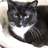 Adopt A Pet :: Millie - Massapequa, NY
