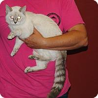 Adopt A Pet :: Lily - Parsons, KS
