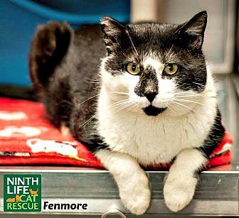 Ontario Cat Rescue Groups