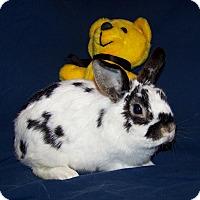 Adopt A Pet :: Izzy - Alexandria, VA