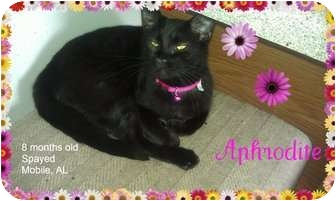 Domestic Shorthair Cat for adoption in Mobile, Alabama - Aphrodite