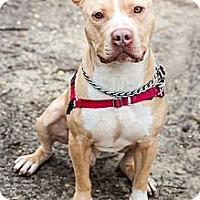 Adopt A Pet :: Graham - Tinton Falls, NJ