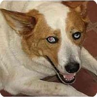 Adopt A Pet :: Sal - Phoenix, AZ