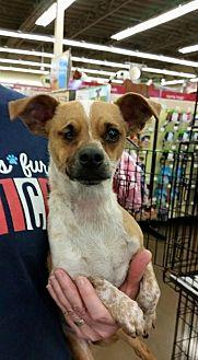 Australian Cattle Dog Mix Puppy for adoption in Fresno, California - Gwen