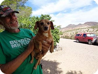 Chihuahua Dog for adoption in Golden Valley, Arizona - PoGo