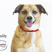 Adopt A Pet :: Holly - Phoenix, AZ