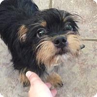 Adopt A Pet :: Oliver - Flower Mound, TX
