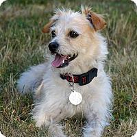 Adopt A Pet :: Harley - Salem, OR