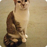 Adopt A Pet :: Starsky - Goldsboro, NC