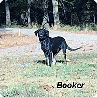 Adopt A Pet :: Booker in CT - Manchester, CT