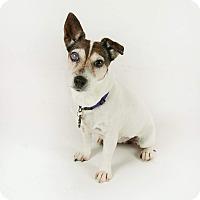 Adopt A Pet :: Dolly - Brea, CA