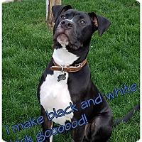 Adopt A Pet :: PUPPY - Hudson!! - Lincoln, CA