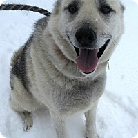 Adopt A Pet :: Misty - Pottsville, PA