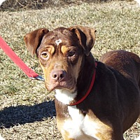 Adopt A Pet :: Aspen - Shelby, MI