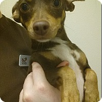 Adopt A Pet :: Meep - Westminster, CA