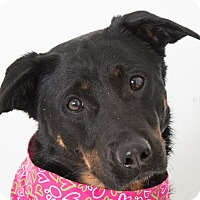 Adopt A Pet :: Princess - Tracy, CA