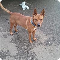 Adopt A Pet :: Pax - Sacramento, CA