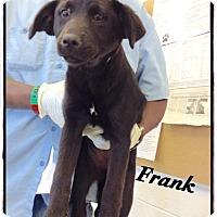 Adopt A Pet :: Frank - Tampa, FL