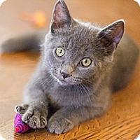 Adopt A Pet :: Heidi - Chicago, IL