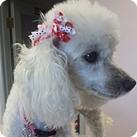 Adopt A Pet :: angelina - Scottsdale, AZ