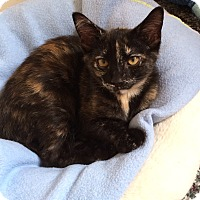 Adopt A Pet :: Lucy - Chesterfield Township, MI