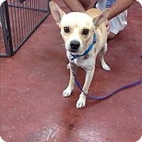 Adopt A Pet :: Rico - Tehachapi, CA