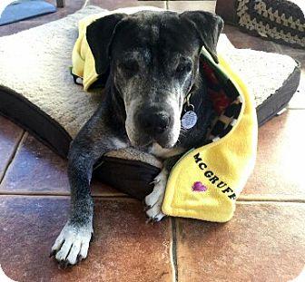 Basset Hound/Shar Pei Mix Dog for adoption in Deltona, Florida - McGruff