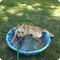 Adopt A Pet :: Ginger - Tallahassee, FL