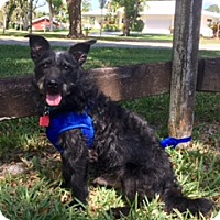 Adopt A Pet :: Waldo - Davie, FL
